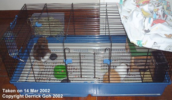 Rabbit cage floor wire carpet vidalondon for Wire guinea pig cages